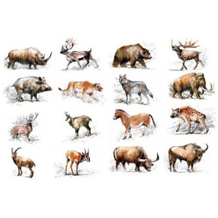 animaux de la préhistoire
