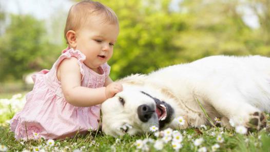 animaux et bébé