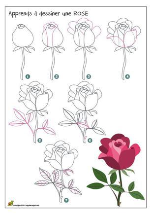 apprendre a dessiner une rose