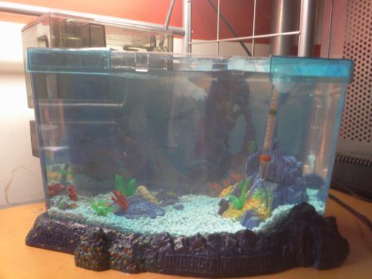 aquarium pour triops