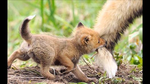 bébé animaux