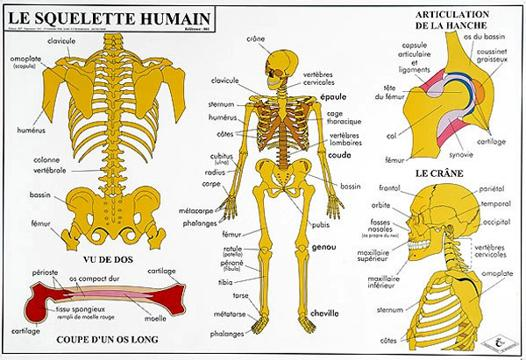carte corps humain