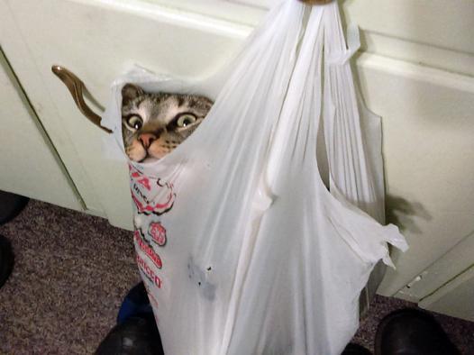 chat dans un sac