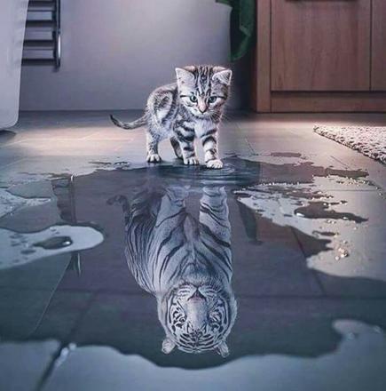 chat et tigre