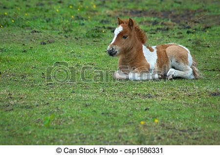 cheval bebe