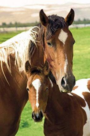 cheval et poulain