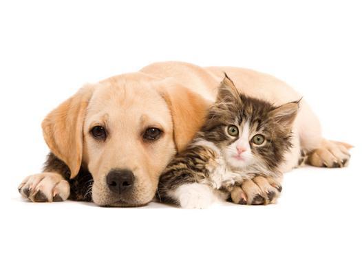 chien et chat compagnie