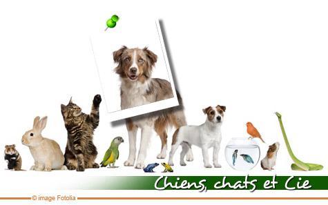 chien et chat et compagnie