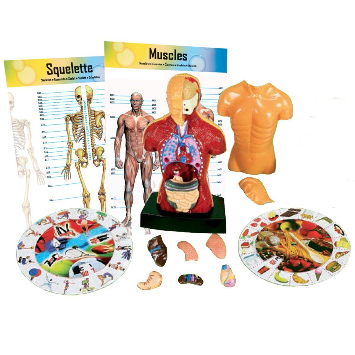 kaptaia corps humain