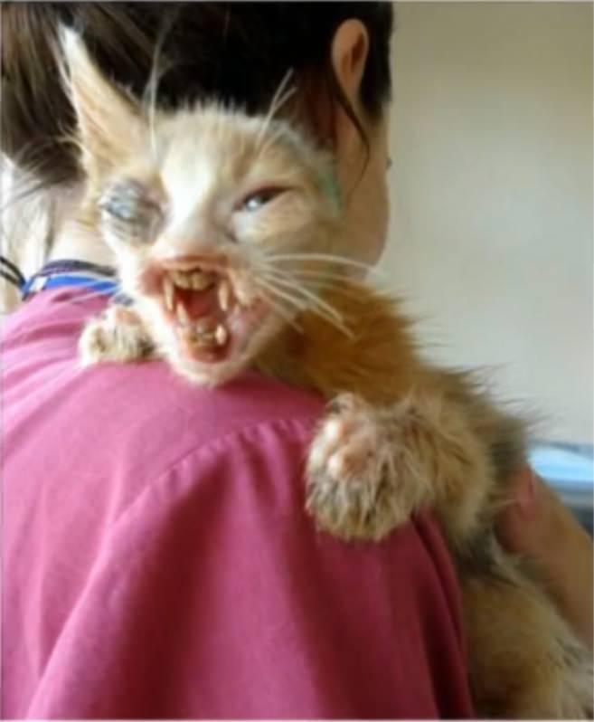 chatte de fille