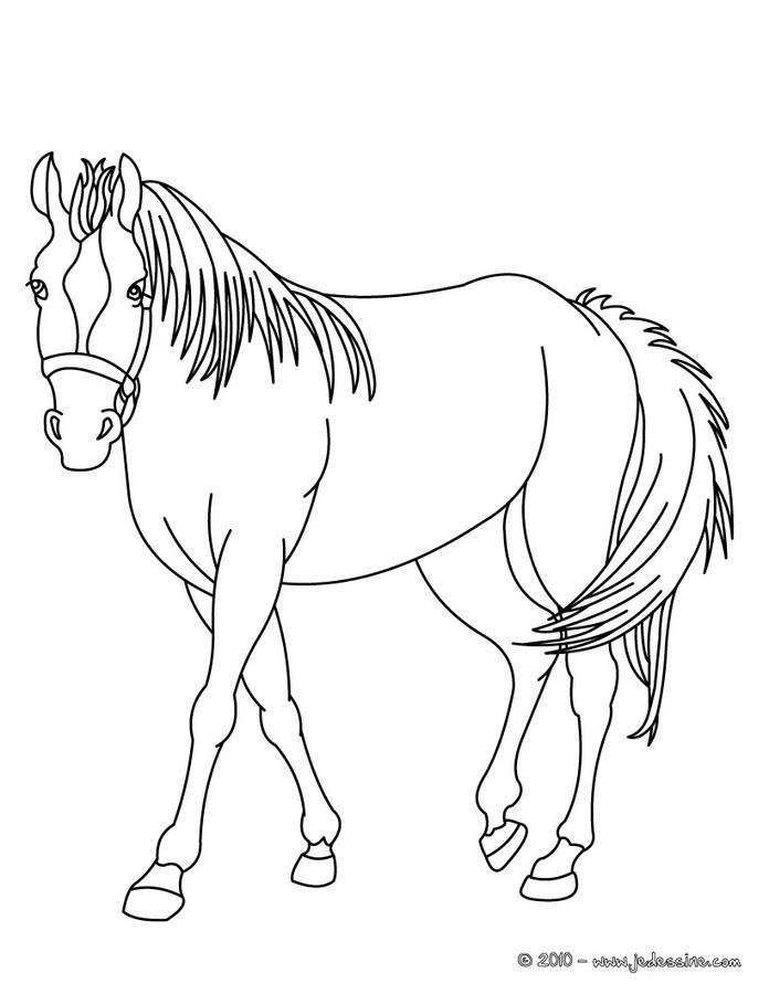 coloriage des chevaux