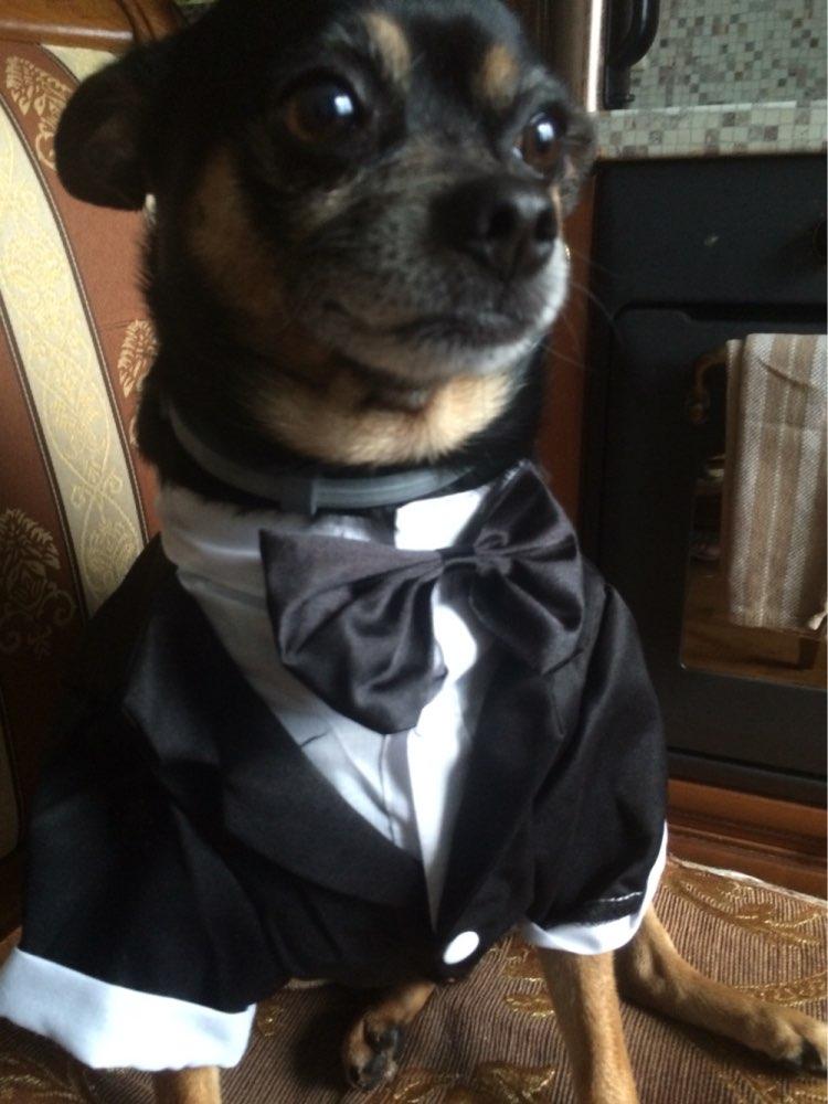 costume mariage pour chien