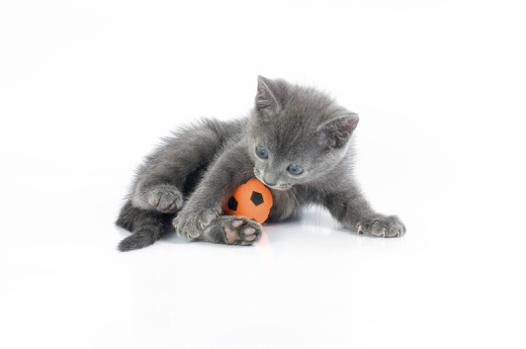 jeux de bébés chats