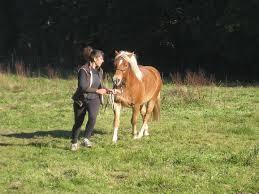 jouer avec son cheval