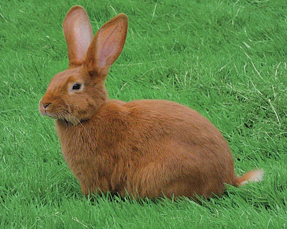 la ferme de beaumont lapin