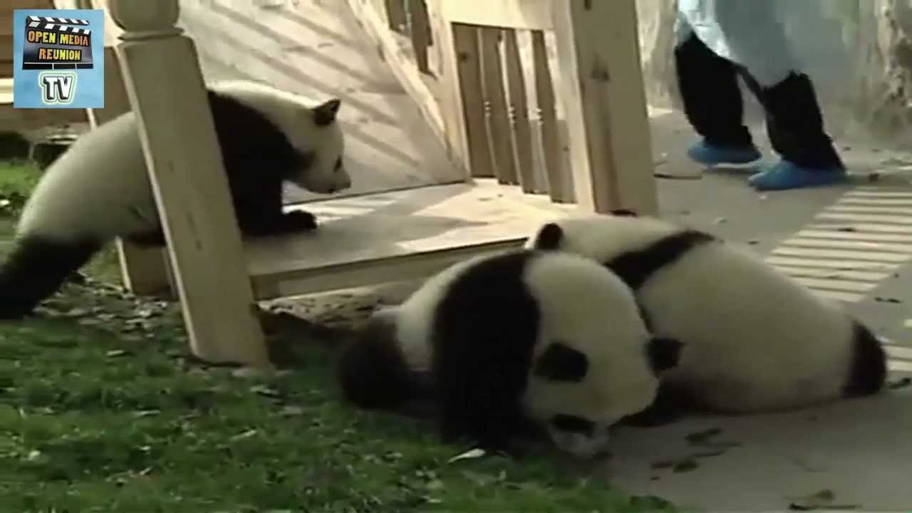 panda toboggan