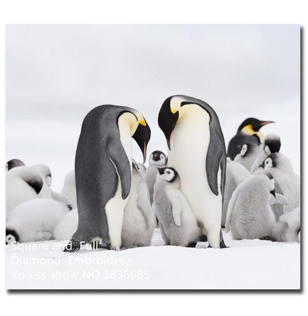 pingouin famille