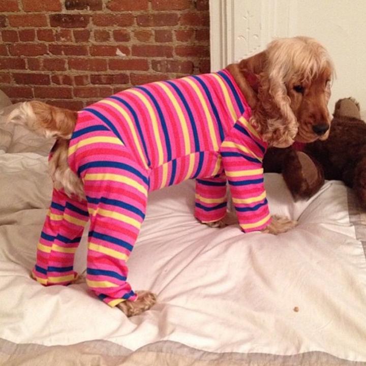 pyjama chien