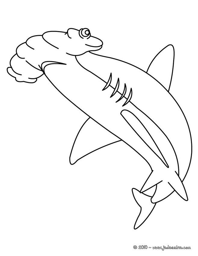 requin marteau coloriage